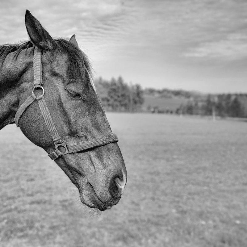 Promo fotografování koní v tréningu Josefa Váni